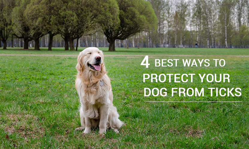 4 Best Ways to Protect your Dog from Ticks